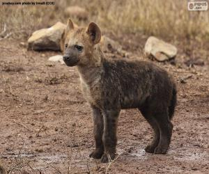Puzle Filhote de hiena