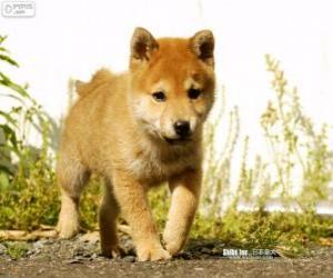 Puzle Filhote de Inu puppy