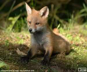 Puzle Filhote de raposa