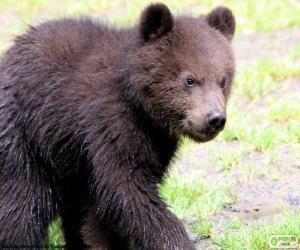 Puzle Filhote de urso, bebê urso