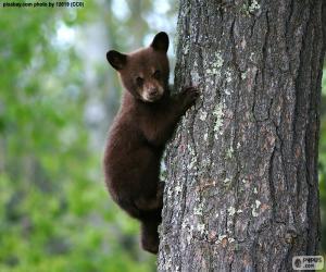 Puzle Filhote de urso marrom escala uma árvore