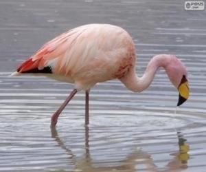Puzle Flamingo-andino