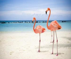 Puzle Flamingo