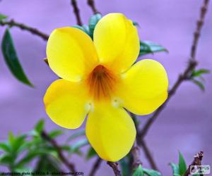 Puzle Flor amarela de cinco pétalas