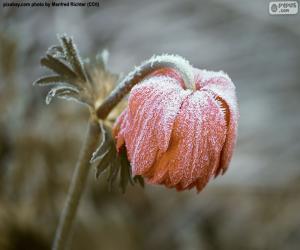 Puzle Flor congelada