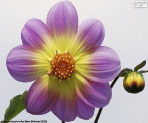 Puzle Flor de Dólia