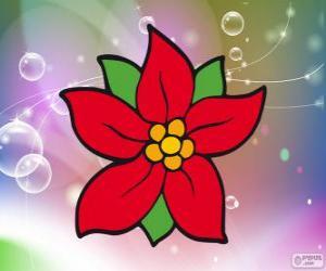 Puzle Flor de Natal