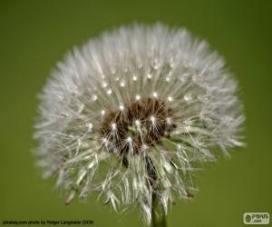 Puzle Flor dente de leão