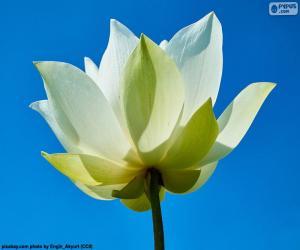 Puzle Flor Lótus Branca
