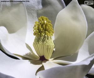 Puzle Flor magnólia