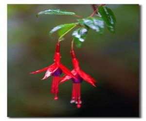 Puzle Flor tropical