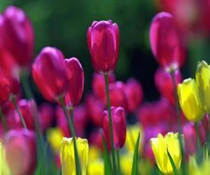 Puzle Flores da primavera