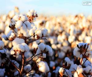 Puzle Flores de algodão
