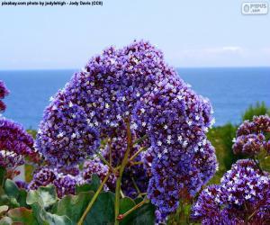 Puzle Flores de Limonium perezii