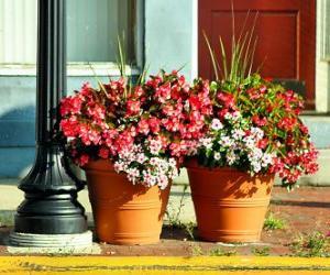 Puzle Flores em um pote ou vaso de plantas
