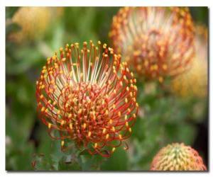 Puzle Flores Exóticas