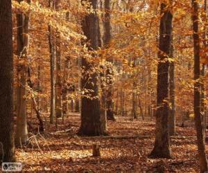 Puzle Floresta no outono
