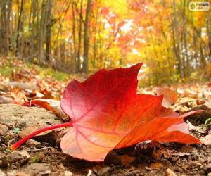 Puzle Folha de outono