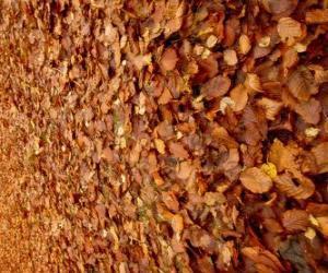 Puzle Folhas caídas no chão, uma imagem típica de outono