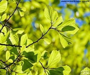 Puzle Folhas de árvore