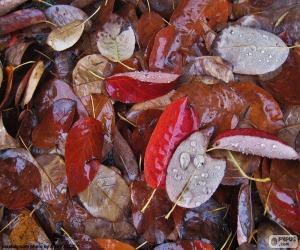 Puzle Folhas de outono molhado