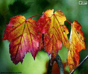 Puzle Folhas de outono