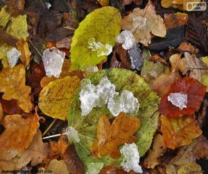 Puzle Folhas e gelo