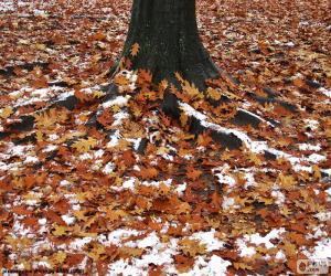 Puzle Folhas e neve