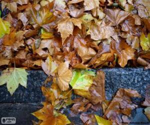 Puzle Folhas molhadas