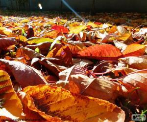 Puzle Folhas secas no outono