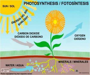 Puzle Fotossíntese