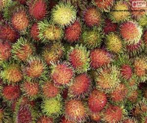Puzle Frutas do Rambutão