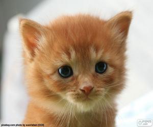 Puzle Gatinho bonitinho