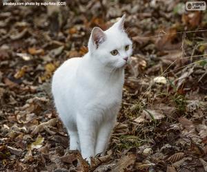 Puzle Gatinho branco