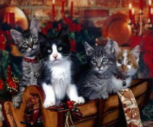 Puzle Gatinhos no dia de Natal