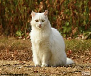 Puzle Gato branco sentado