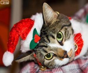 Puzle Gato com um chapéu de Papai Noel