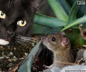 Puzle Gato e rato