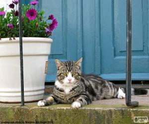 Puzle Gato e vaso de flores