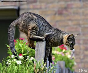 Puzle Gato em cima do muro