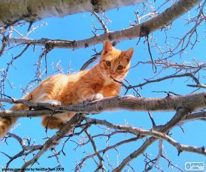 Puzle Gato em um galho