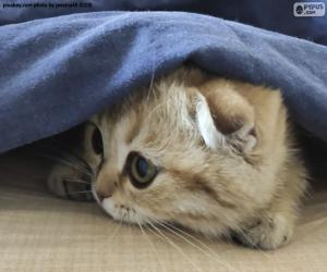 Puzle Gato escondido