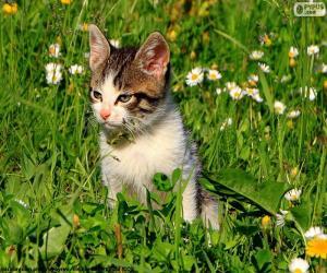 Puzle Gato no campo
