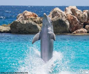 Puzle Golfinho fazendo um truque