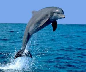 Puzle Golfinho
