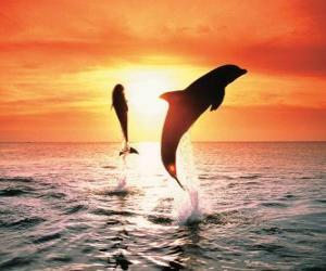 Puzle Golfinhos por do sol