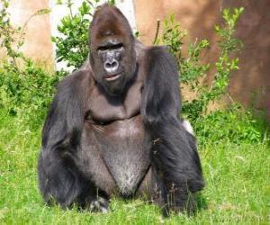 Puzle Gorila