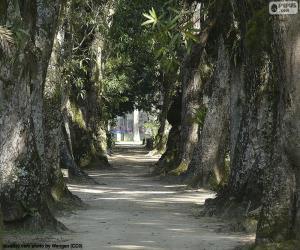 Puzle Grandes árvores, Brasil