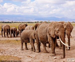 Puzle Grupo de elefantes