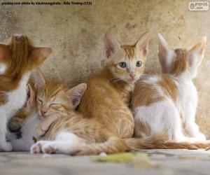 Puzle Grupo de gatinhos